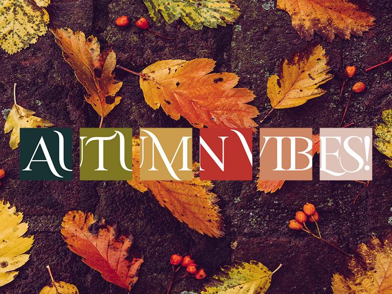 vms autunno 21 web main